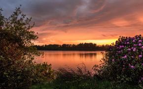 barcraigs reservoir, scotland, водохранилище Баркрейгс, Шотландия, закат, кусты, рододендроны, озеро