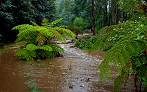 fiume, foresta, palma, paesaggio, 1 colore