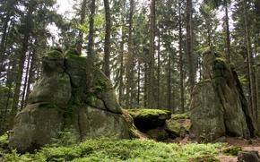 лес, скалы, пейзаж