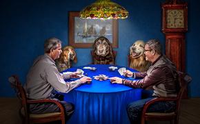 Maschi, Cani, carte, gioco, poker, situazione, patatine fritte, guardare