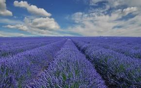 provence, Frana, Provence, Frana, Lavanda, nuvens, campo