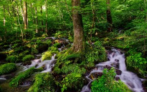 forest, waterfalls, Trees, landscape