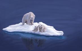 океан, льдина, арт, животные, белые, медвежата, вода, медведи, медведица