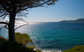 tree, sea, sunny, waves, coast, needles