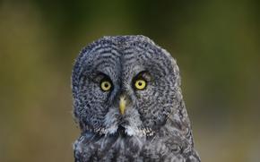 green, Owl, plumage, bird, background