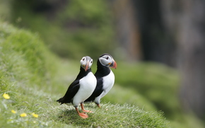 coast, grass, pair, Birds, deadlocks