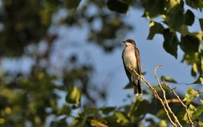 ramo, uccello, albero, fogliame