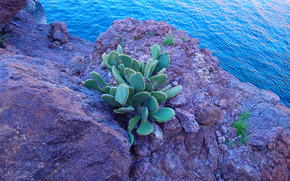 river, rock, cactus, nature