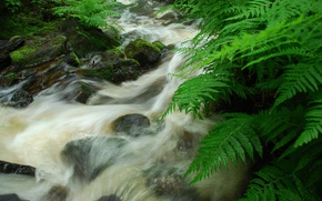 small river, flow, stones, fern