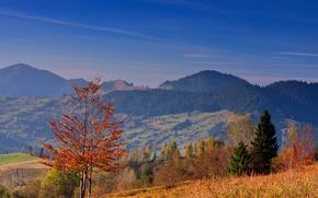 Rumunia, jesie, Hills, drzew, niebo, krajobraz