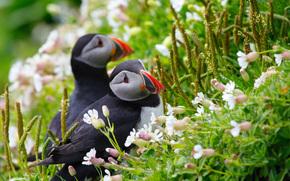 Flowers, view, grass, dew, deadlocks, Birds, pair, spikelets