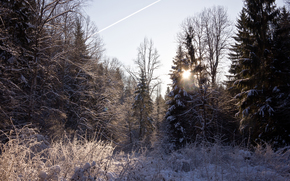 snow, sun, forest, Trees, Winter