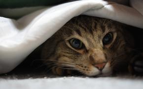 ткань, котэ, морда, лежа, кот, кошка