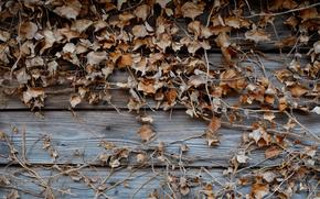 board, leaves, autumn, liana