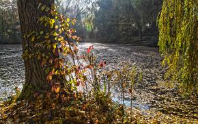 parco, foresta, stagno, autunno