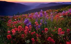 поле, цветы, горы, туман, закат
