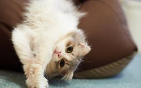 andar, travesseiro, recreao, gato