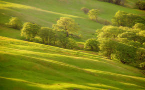 greens, Trees, slope, hill, grass