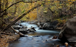 american, canyon, river, autumn, stones, forest, landscape