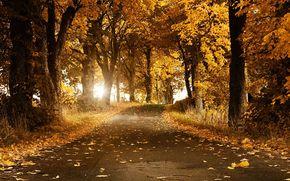 аллея, лес, осень