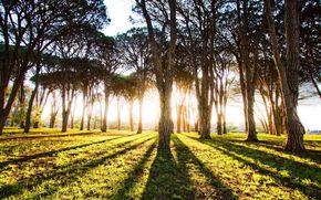 деревья, солнце, трава