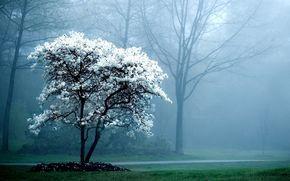 foresta, nebbia, fiori