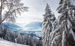 inverno, foresta, neve