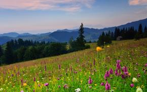 campo, fiori, alberi, Hills, paesaggio
