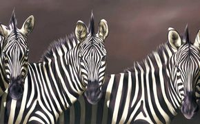 animals, view, Zebras, Strips, Art, snout