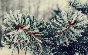 Winter, branch, needles, Tree, snow