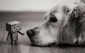 взгляд, коробок, коробка, лежит, черно-белое, собака