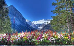 lake louise, canadian rockies, banff national park, alberta, canada, озеро, Банф, Альберта, Канада, цветы, деревья, горы