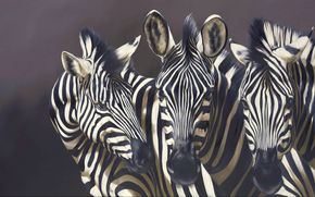 background, Strips, snout, animals, picture, Zebras, Art