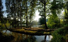 树, 太阳, 水, 反射, 绿色