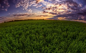 sunset, field, sky, landscape