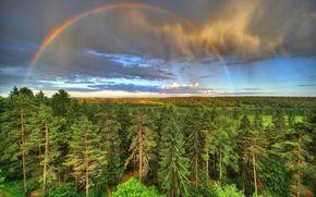 лес, деревья, небо, радуга, пейзаж