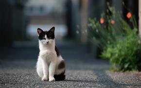 цветы, асфальт, кошка, дорога, улица, кот