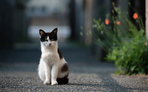 Flowers, asphalt, cat, road, Street, cat