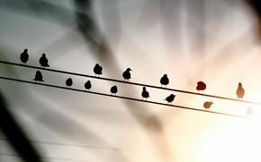 Birds, wire, background