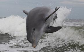spray, sea, nature