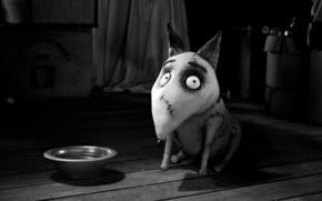 cartone animato, cane, ciotola, Frankenweenie