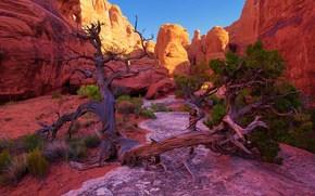 горы, скалы, дерево, пейзаж
