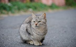 asphalt, cat, Street, road, gray
