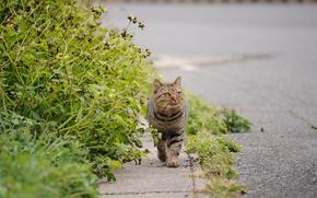 cat, asphalt, road, greens, tour