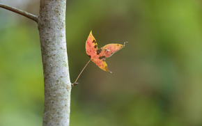 фокус, лист, ствол, осень, паутинка