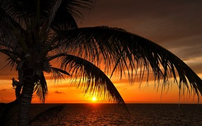 mer, paume, coucher du soleil