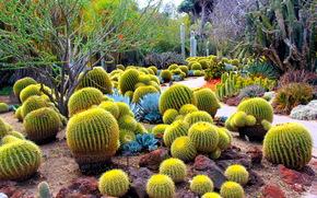 пейзаж, тропики, кактусы