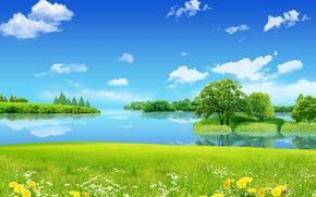 summer, lake, meadow, Flowers