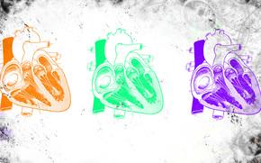 рисунок, строение, сердца