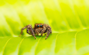 паук, зелень, макро, лист, паучок